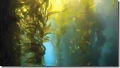 kelp_iodine