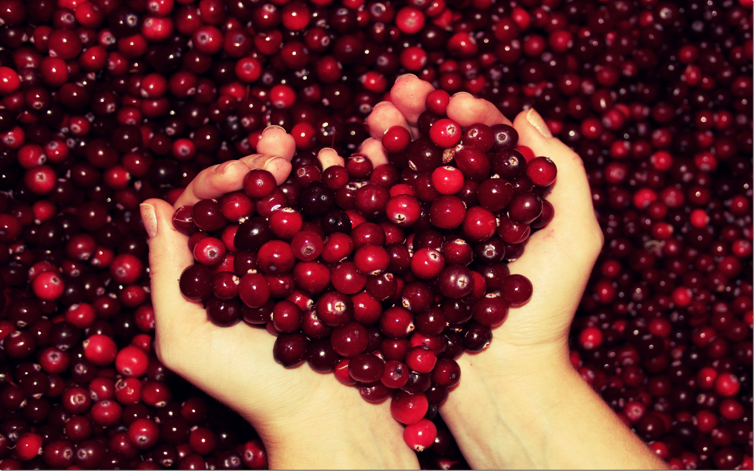 autumn-free-wallpaper-autumn-s-cranberry-heart